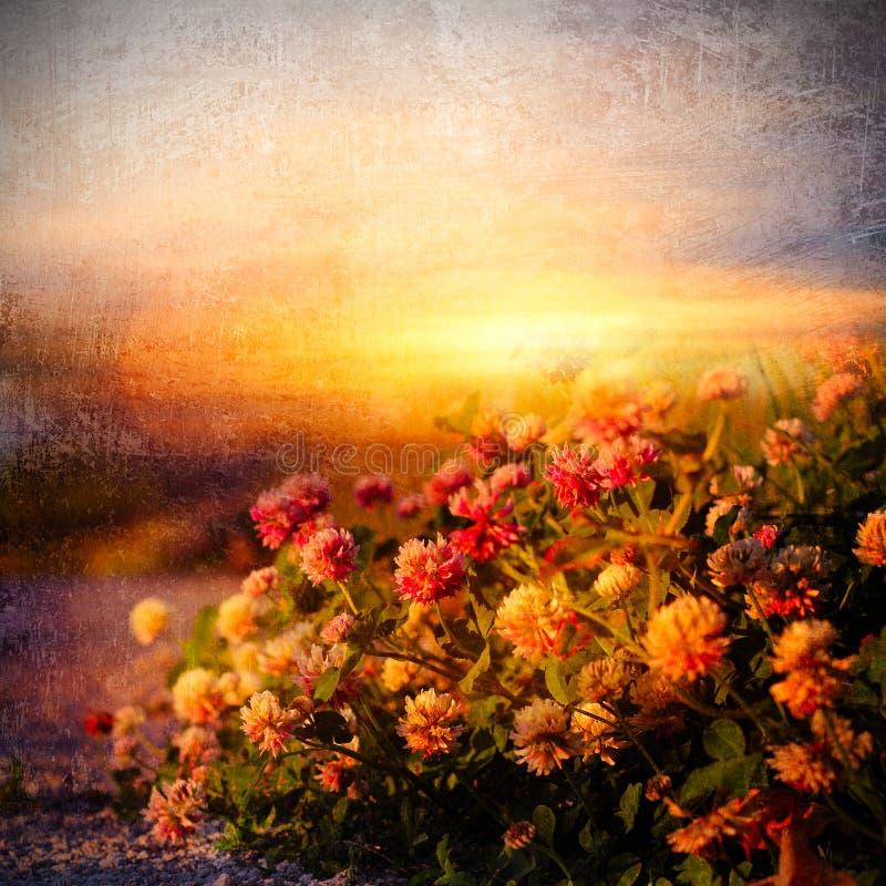 field цветки одичалые стоковые фото