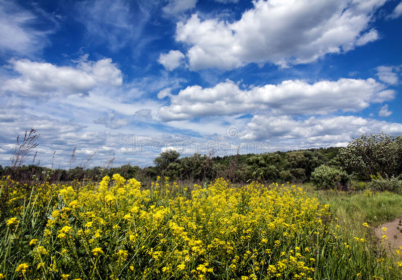 field цветок стоковое изображение