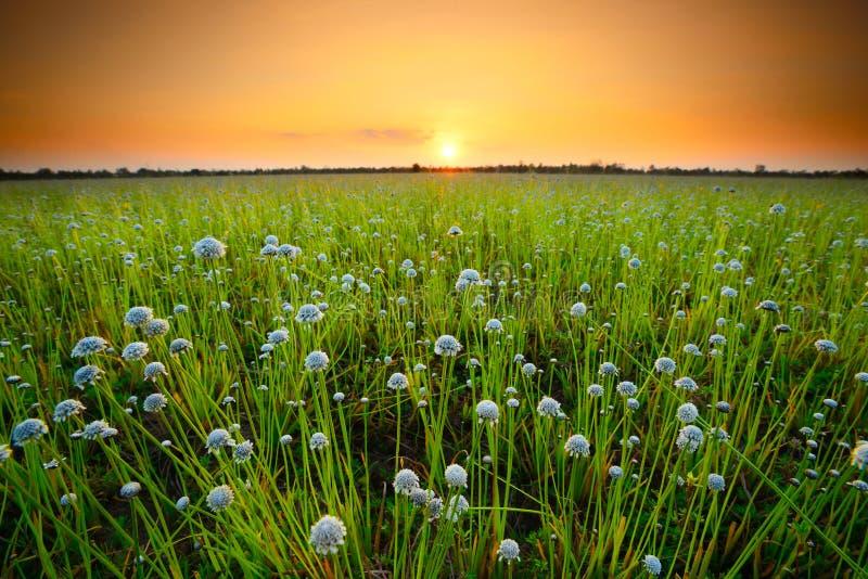 field цветок стоковые фотографии rf