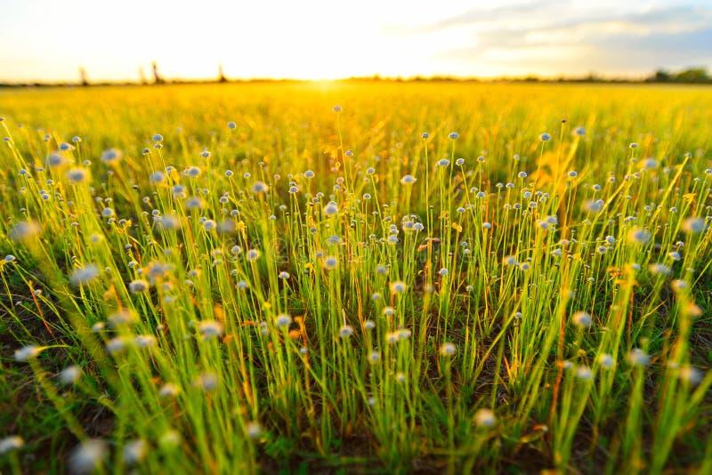 field цветок стоковое фото rf