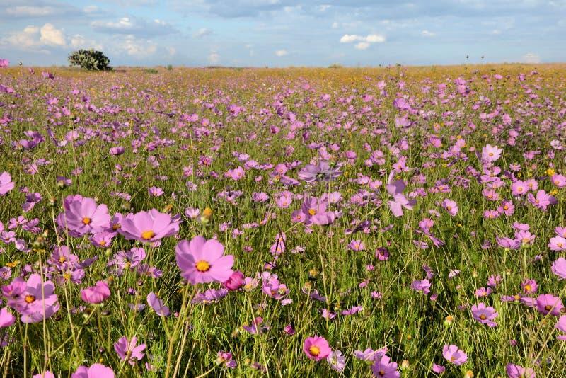 field цветок стоковая фотография rf