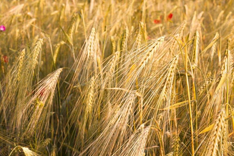 Download Field stock image. Image of fresh, detail, deep, farming - 11094351