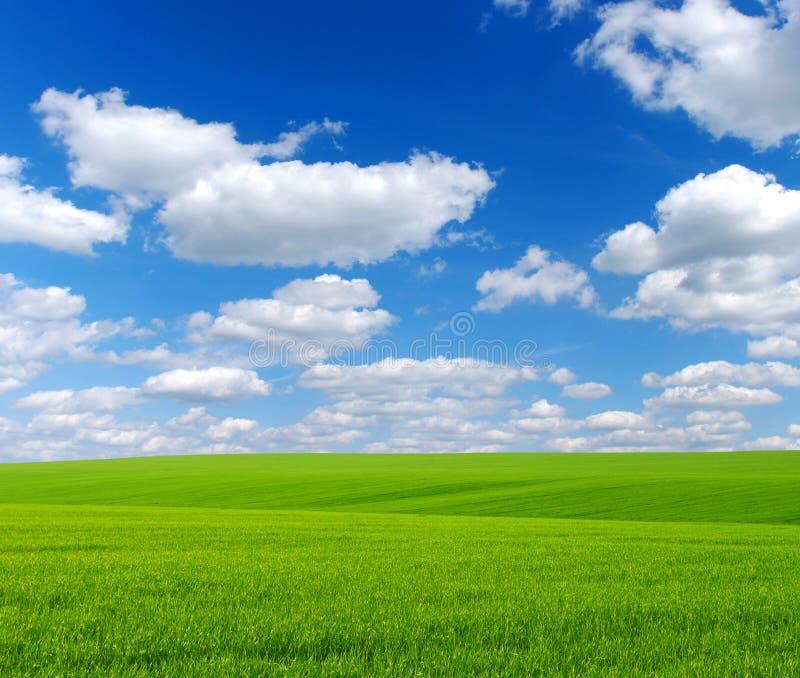 Download Field stock photo. Image of plant, plain, meadow, season - 11721120