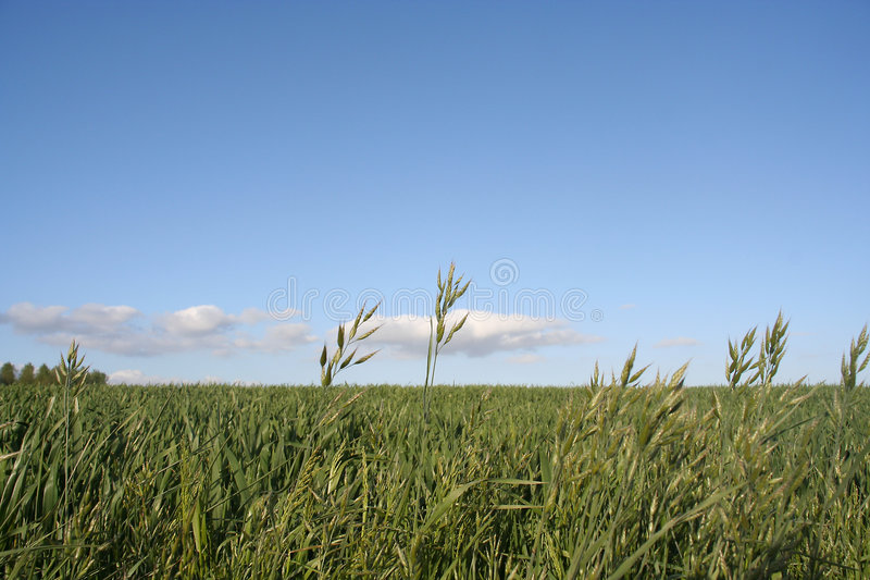 Download Field Stock Photos - Image: 120363