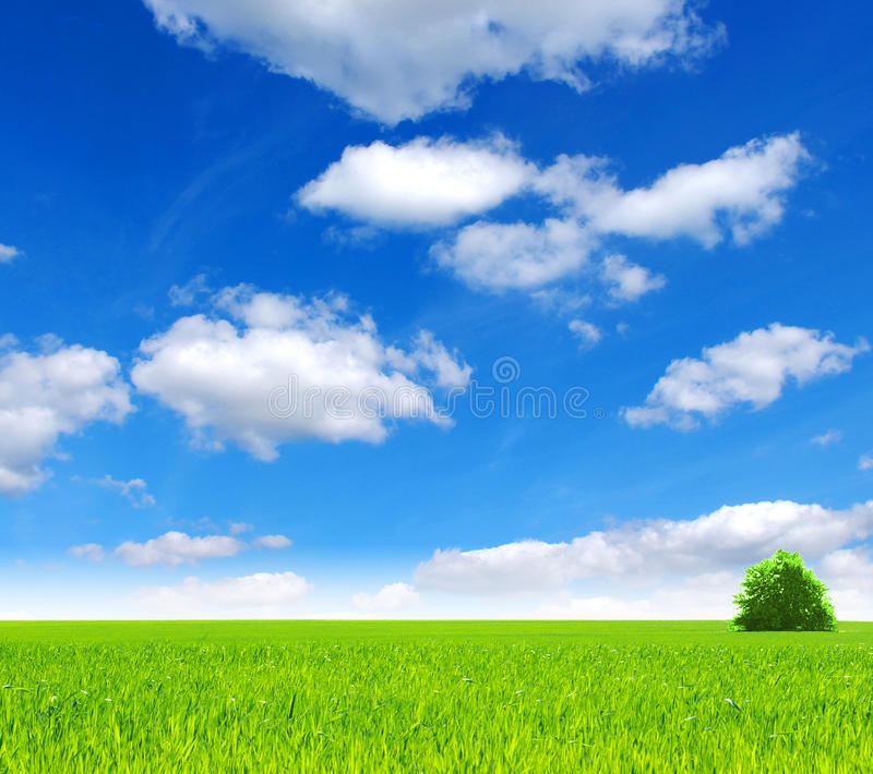 Download Field stock image. Image of field, cloud, fresh, green - 12917437