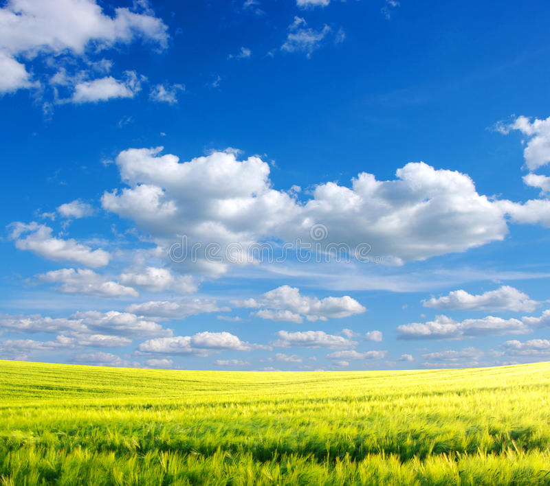 Download Field stock image. Image of sunlight, nature, green, panoramic - 13156869