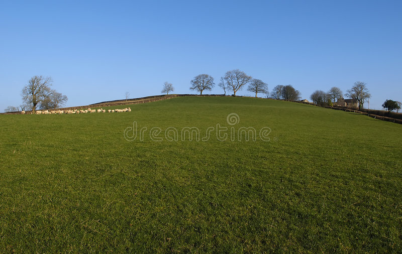 Download Field stock image. Image of meat, nature, sunny, countryside - 143927