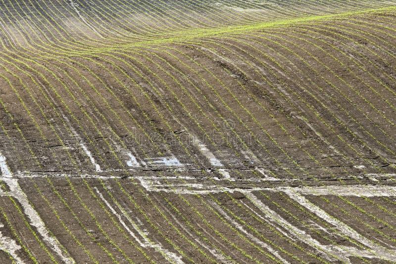 Download Field stock image. Image of destruction, field, plants - 14573435