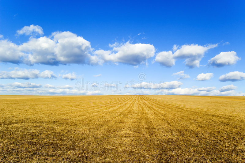 The field. royalty free stock photography