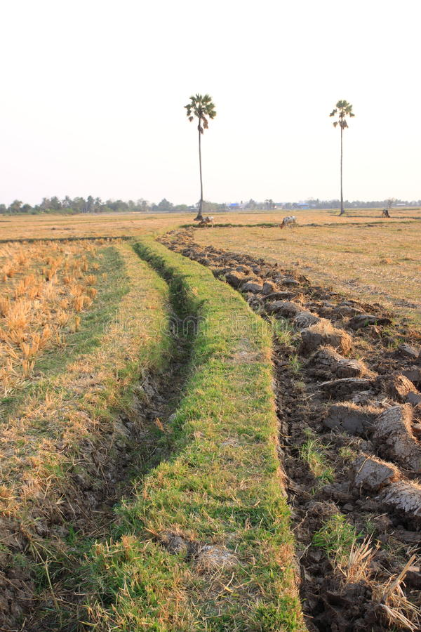 Download Field Stock Photos - Image: 19363343