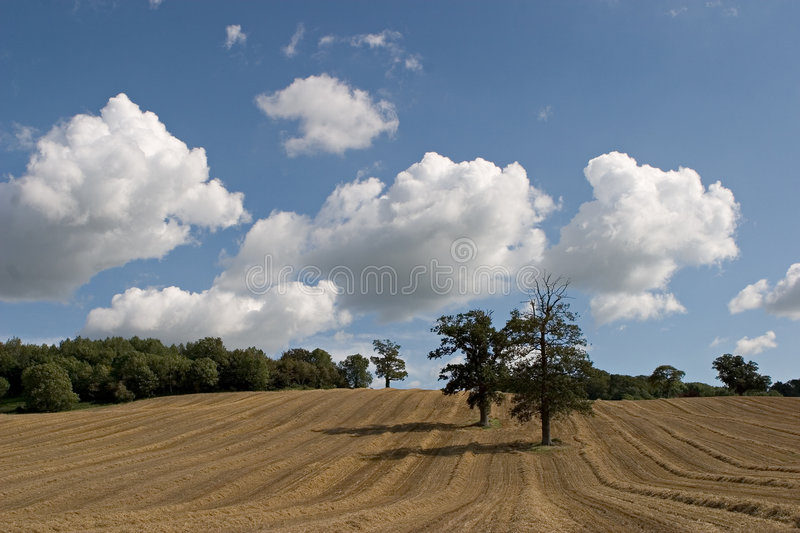 Download Field 2 stock photo. Image of field, lines, tree, trees - 63288
