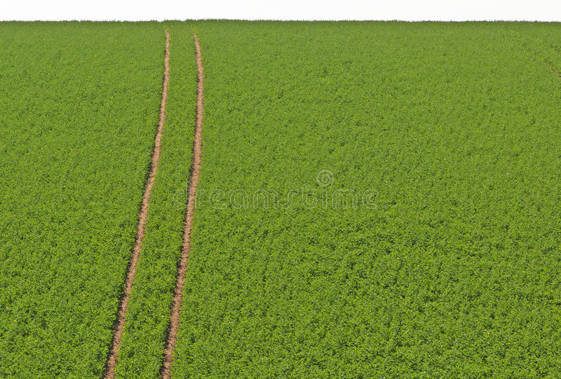 The Field stock images