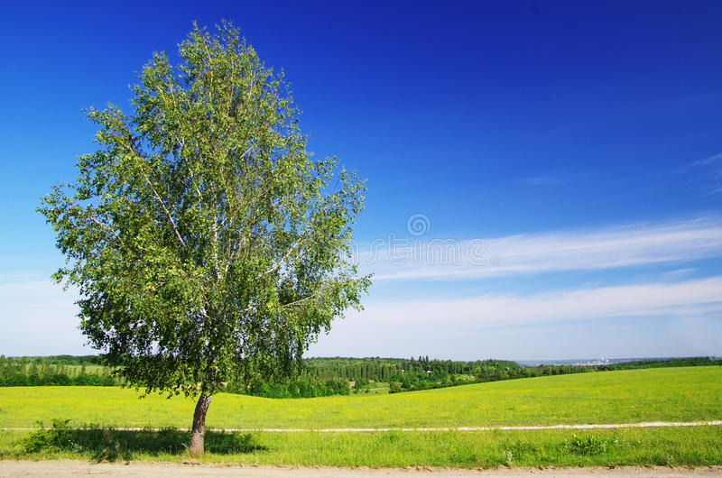 Download Field stock photo. Image of pasture, heavenly, field - 25597410