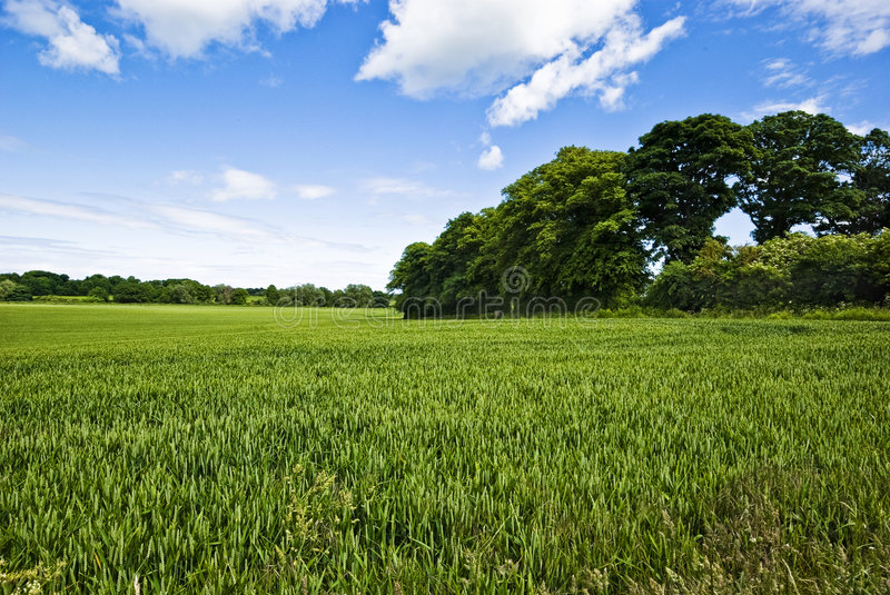 Download Field stock photo. Image of atmosphere, grassland, grassy - 6687506