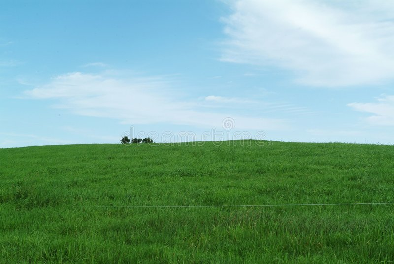 Download Field stock image. Image of field, nature, daytime, tree - 77341