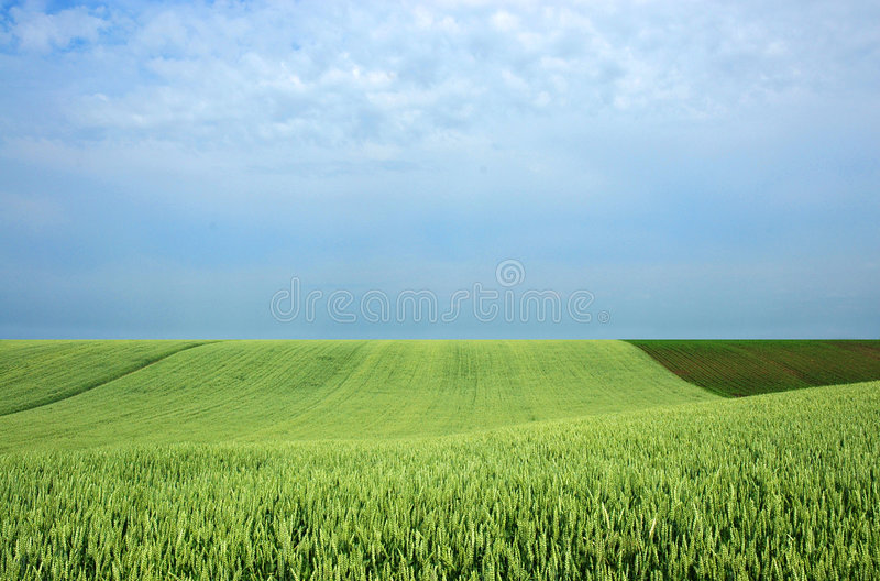 Field royalty free stock image