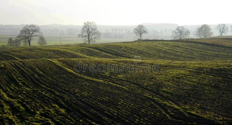 Field, Agriculture, Hill, Hill Station royalty free stock image
