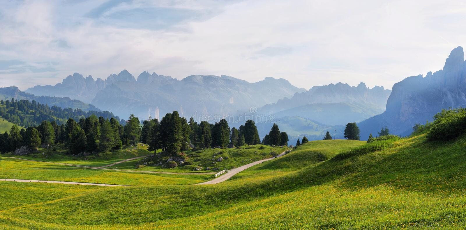 Field with alpine yellow flowers from Sella pass, Dolomites Alps, Italy, Europe. Field with alpine yellow flowers and mountains at background from Sella pass royalty free stock photo