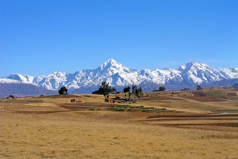 Field of the Altiplano, Bolivia royalty free stock photo