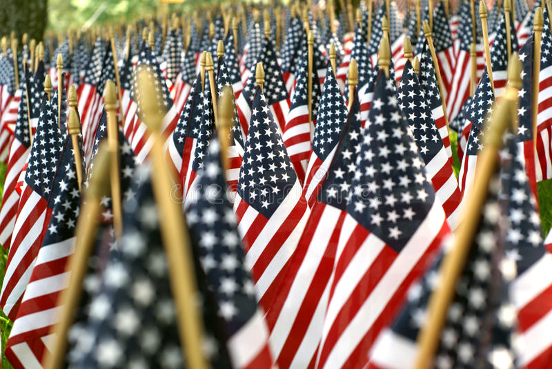 Field Of American Flags 02608 stock photo