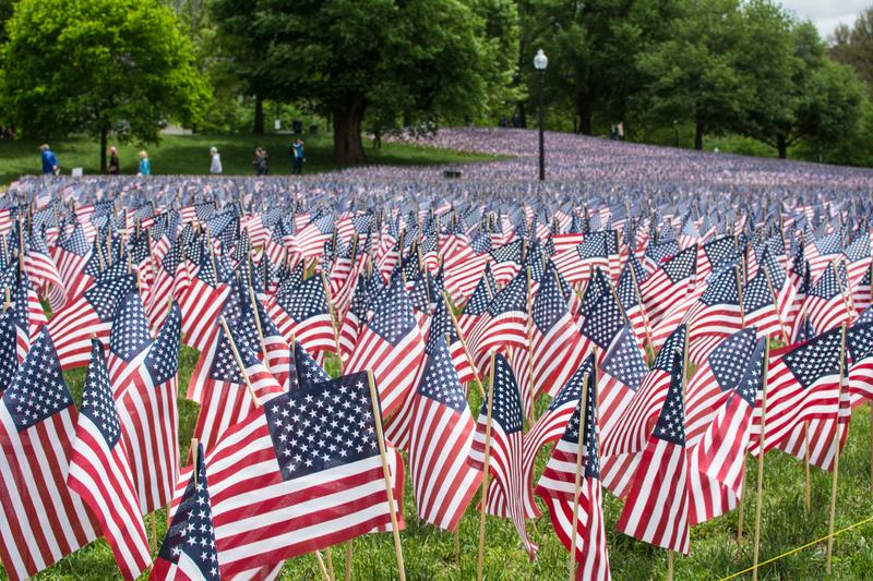 A field of American Flags. Flowing in the wind on Boston Common, the star spangled banner royalty free stock images