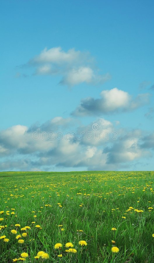 Free Field And Blue Stock Photos - 1904563