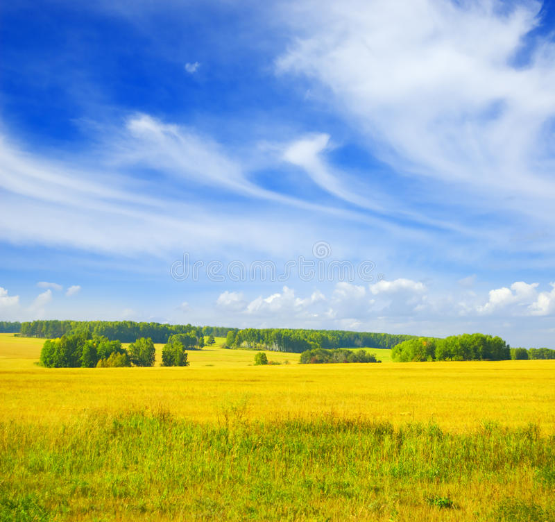 Autumn landscape. Yellow field and blue sky.  royalty free stock photos