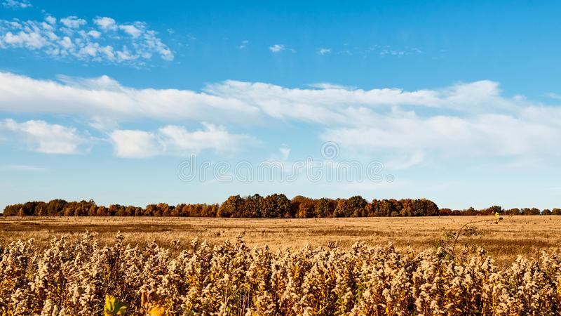 Field. Autumn panoramic landscape. Orange field and blue sky. Soft focus, motion blur. Field. Autumn panoramic landscape. Orange field and blue sky. Soft focus royalty free stock images
