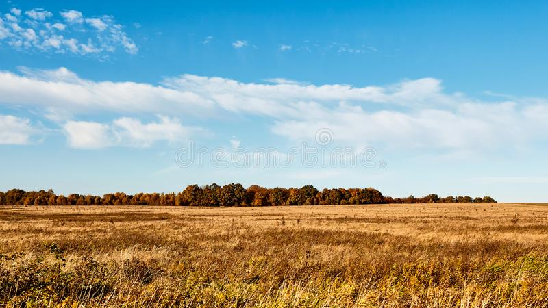Field. Autumn panoramic landscape. Orange field and blue sky. Soft focus, motion blur. Field. Autumn panoramic landscape. Orange field and blue sky. Soft focus royalty free stock photography