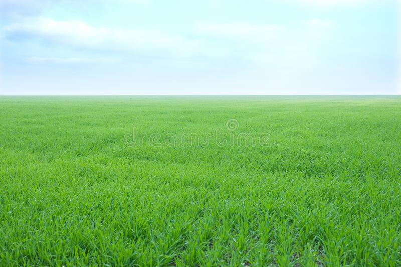 Field on a background of the blue sky. Horizontal stock photos