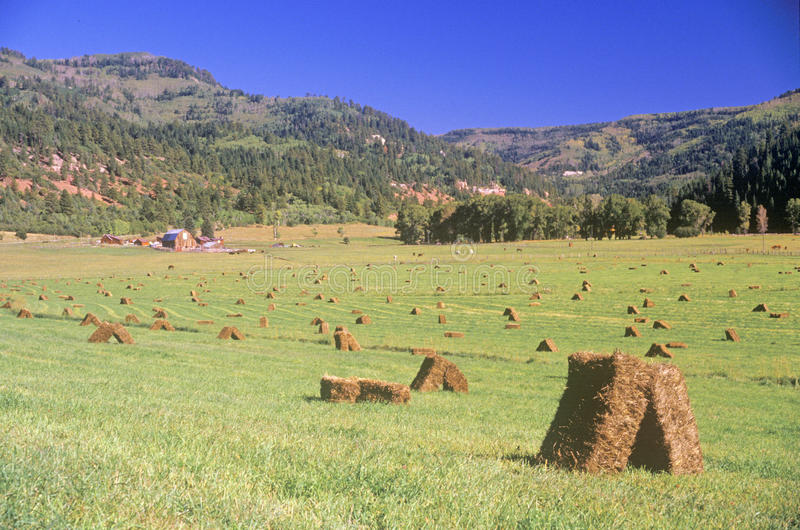 Download Field of baled hay stock image. Image of cultivated, states - 26254455