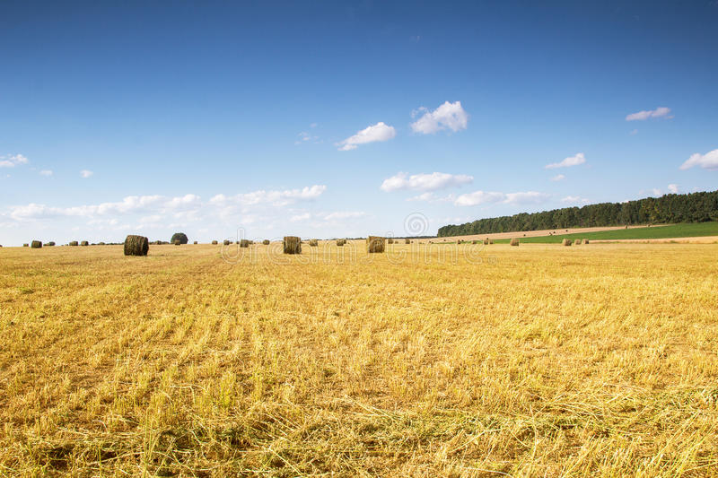 Field with bales of straw. Bales of straw on the mown pole.Goluboe sky with clouds royalty free stock photos