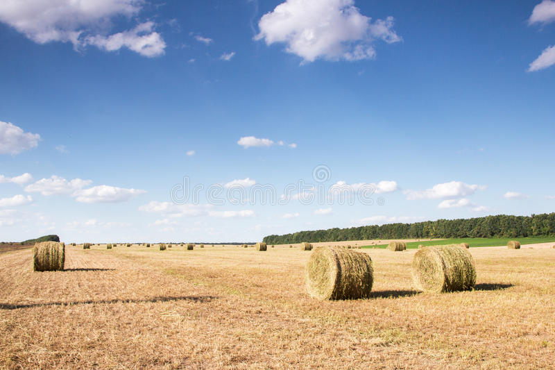 Field with bales of straw. Bales of straw on the mown pole.Goluboe sky with clouds stock photos