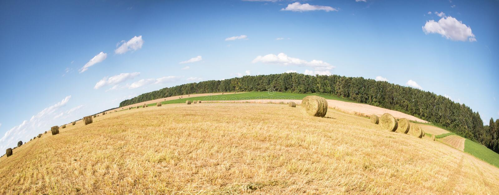 Field with bales of straw. Bales of straw on the mown pole.Goluboe sky with clouds royalty free stock photo