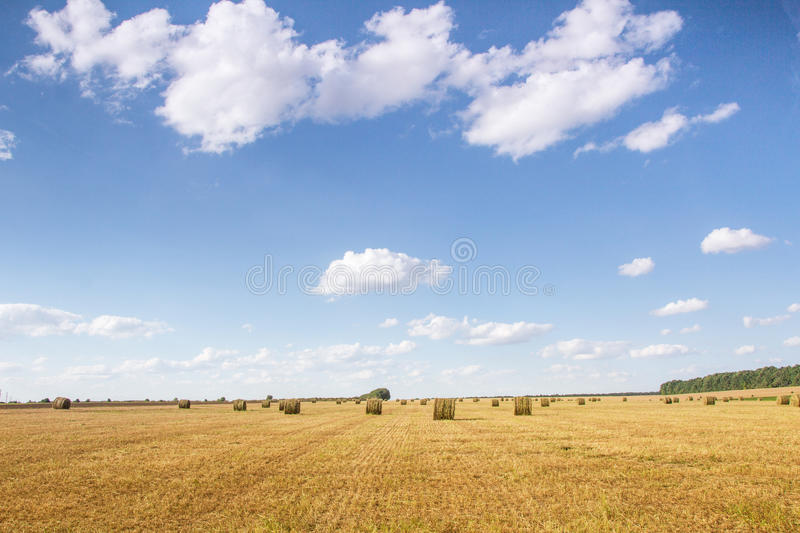Field with bales of straw. Bales of straw on the mown pole.Goluboe sky with clouds stock photo