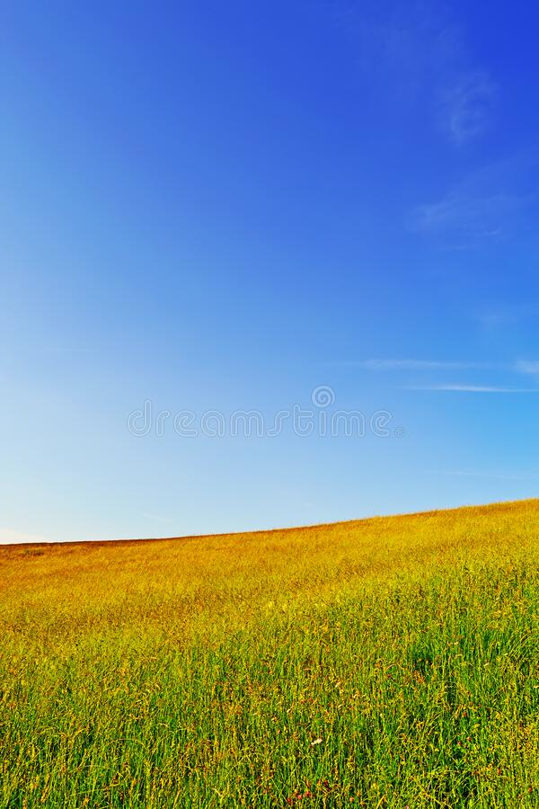 Grass Field with Blue Sky royalty free stock photography