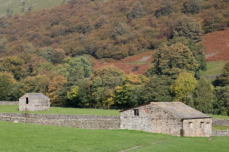 Field barns, Muker, Swaledale, Yorkshire Dales. Two field barns, or cowhouses, in fields by Muker, Swaledale, Yorkshire Dales, North Yorkshire, UK with autumn royalty free stock photography