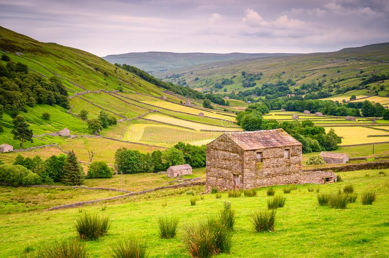 Field Barns in Upper Swaledale. Swaledale is one of the most northerly dales in the Yorkshire Dales National Park, famous for its wildflower meadows, field barns stock images