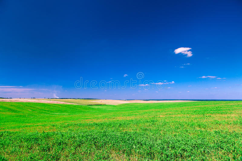 Field. Beatiful morning green field with blue heaven stock photos