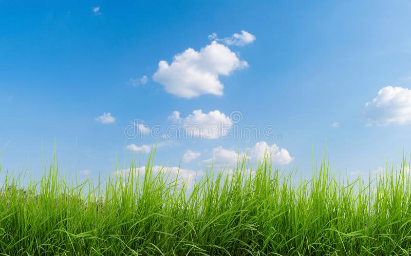 Field with a beautiful green grass in the foreground. In the background we can see a beautiful blue sky with white clouds on an royalty free stock photography