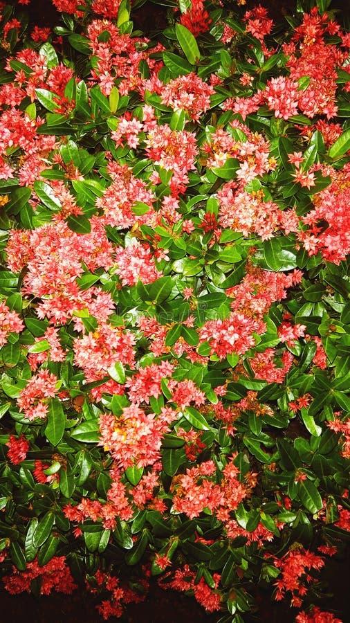 field blomman royaltyfri fotografi