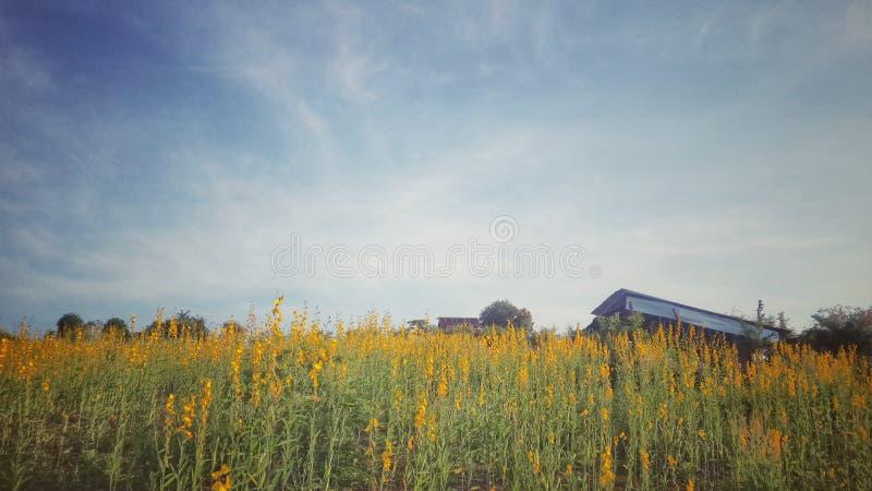 field blomman arkivfoton