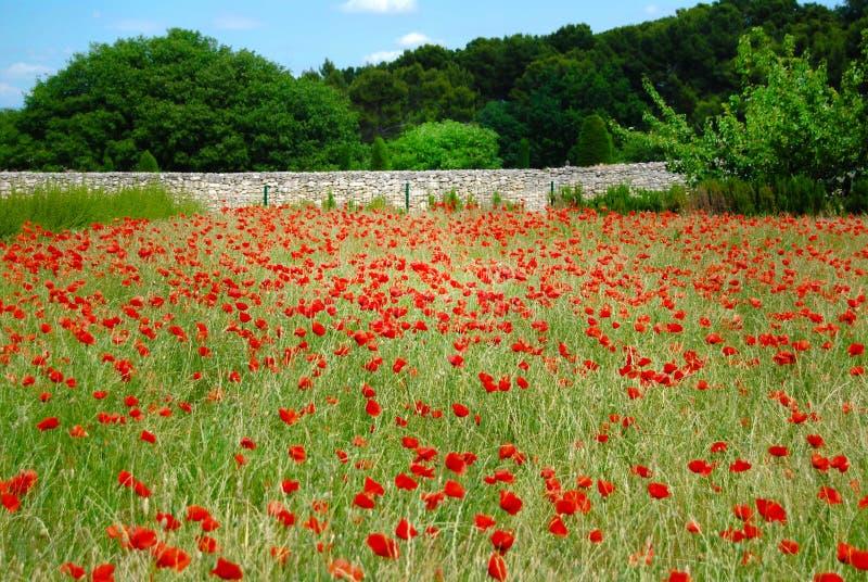 St Remy Poppy Field Vincent Van Gogh royalty free stock photo