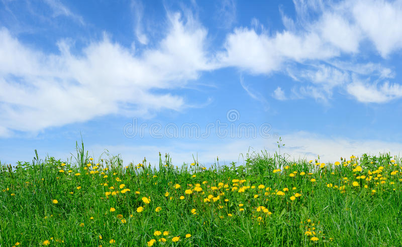 Download Field with blowballs stock photo. Image of dandelion - 13158748