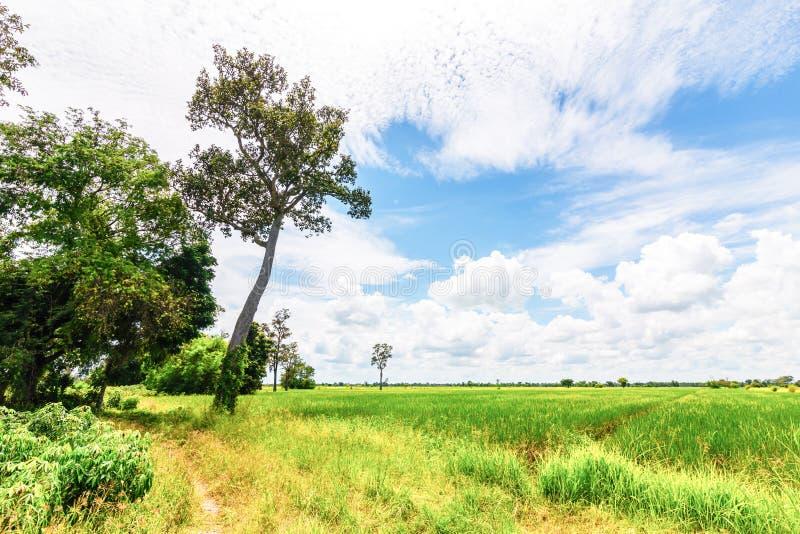 Big Tree And Nice Sky Stock Image. Image Of Tree