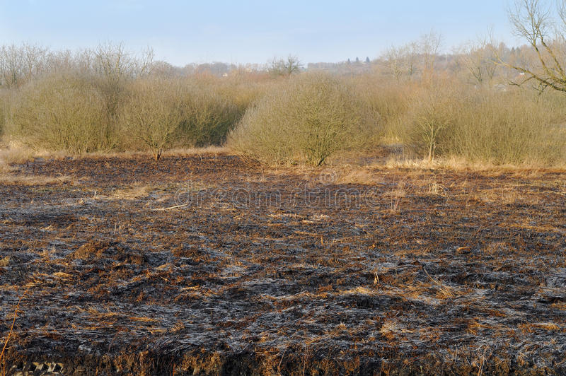 Field of a burnt grass. At the sunny day stock photography