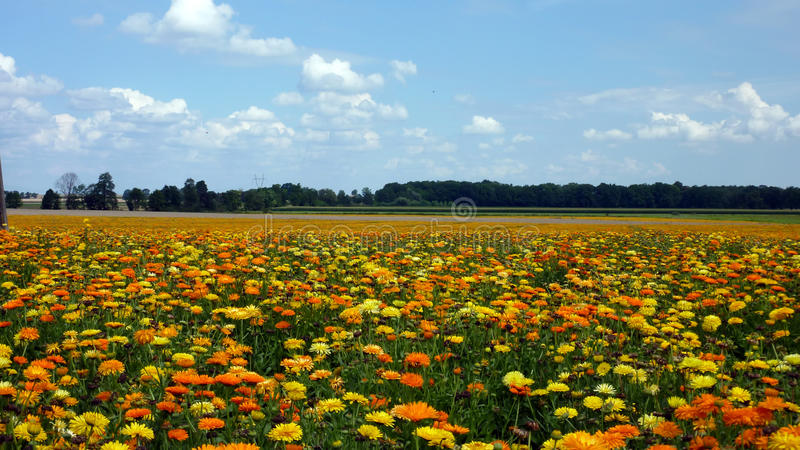 Download Field Of Colours Stock Photo - Image: 16394790