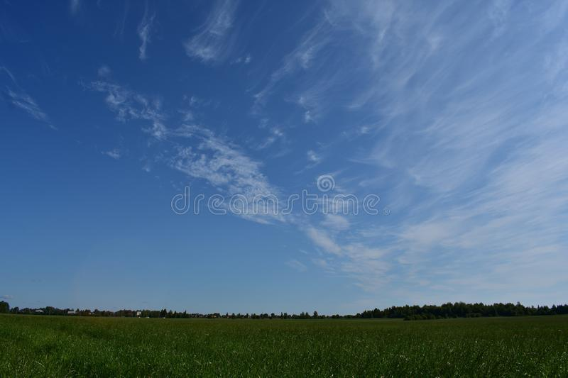 Field with a crop of crops, in the distance you can see the village,forest, blue sky royalty free stock photo