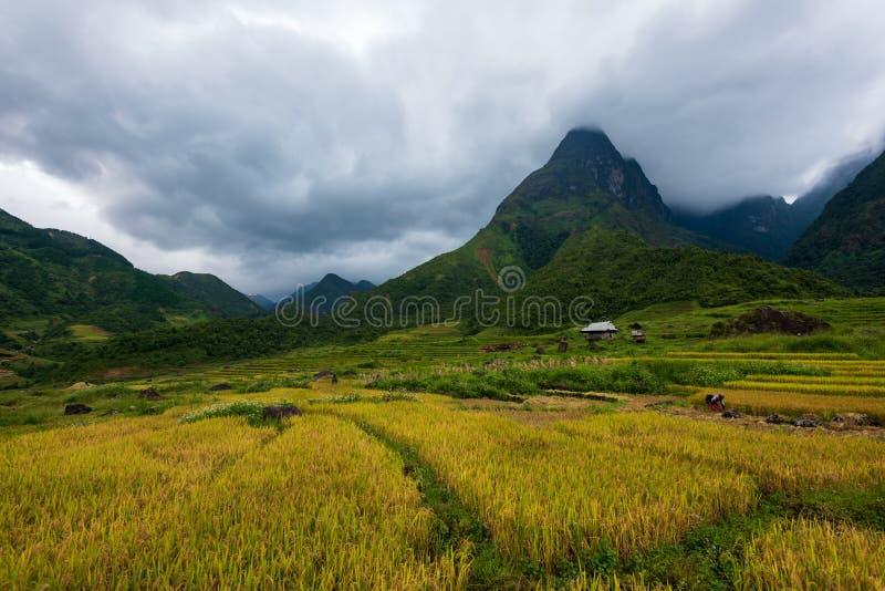 Grasslands in Fansipan Range, Vietnam royalty free stock photos