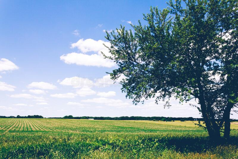 Field of crops on sunny day royalty free stock photography